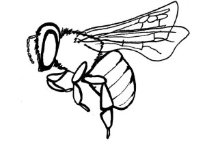 Bee Pest Control Pretoria
